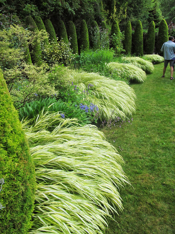 Grasses evergreen and feathers on pinterest for Japanese ornamental grass varieties