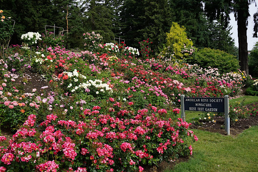 Our visit to portland s international rose test garden the martha stewart blog for The gardens of the american rose center