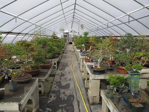 9 New England Bonsai Gardens Often Boards ...