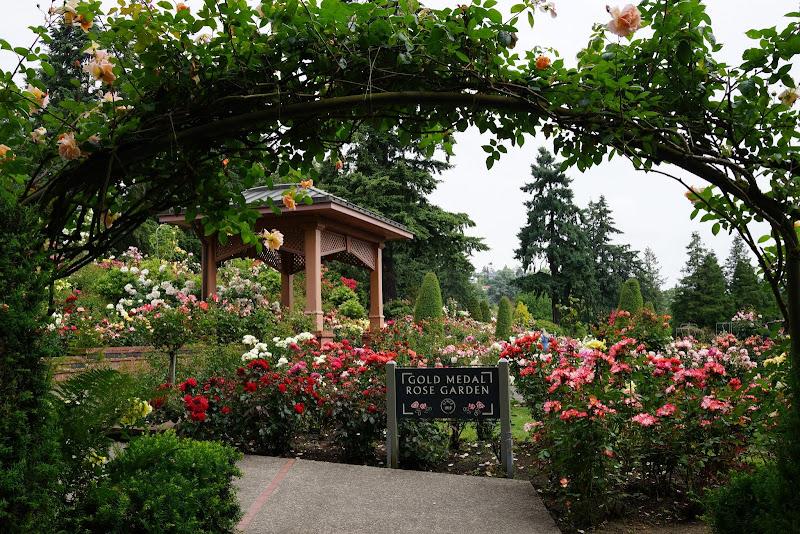 46 the gold medal rose - Portland Rose Garden