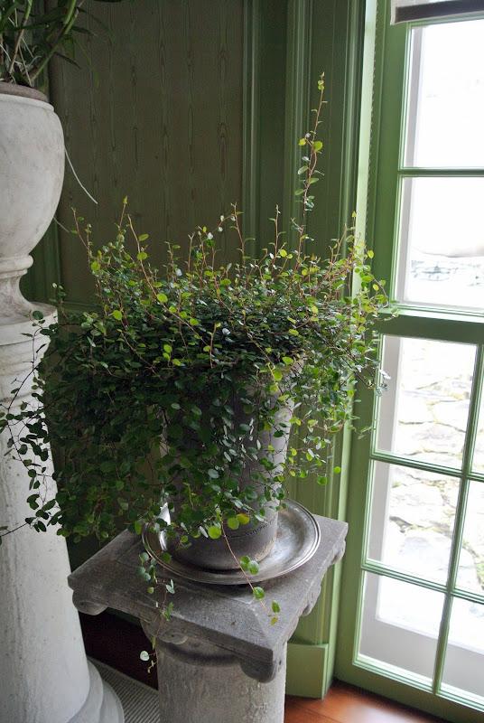 Creeping Houseplant