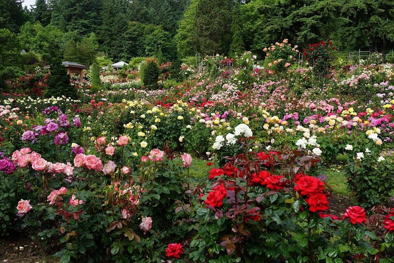 35 - Portland Rose Garden
