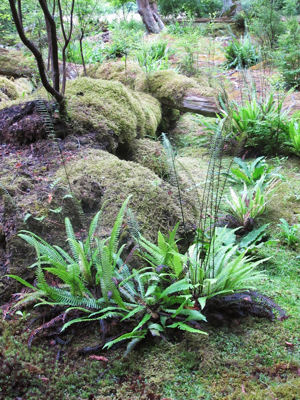 Visiting The Bloedel Reserve In Washington State - The ...