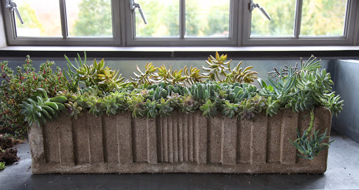 Planting Succulents In Cement Troughs
