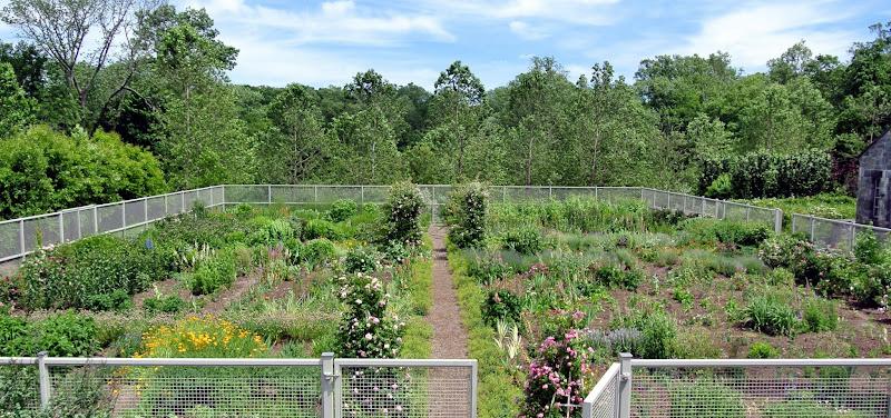 A June Garden Tour at Cantitoe Corners - The Martha Stewart Blog