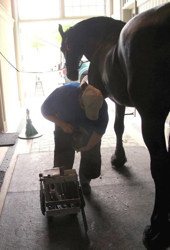 Preparing My Horses For Skylands The Martha Stewart Blog