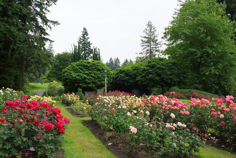 11 portland - Portland Rose Garden