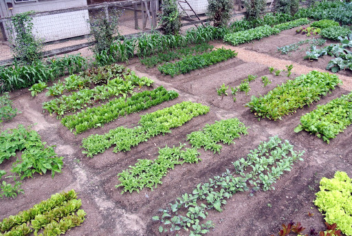 2 This Area, Adjacent To The Chicken Coops, Has Been Very Successful For Growing  Vegetables.