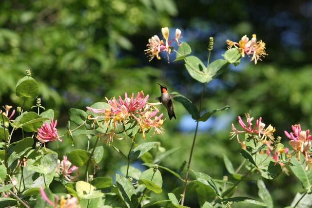 My Nephew, Charlie\'s, Hummingbird Garden - The Martha Stewart Blog