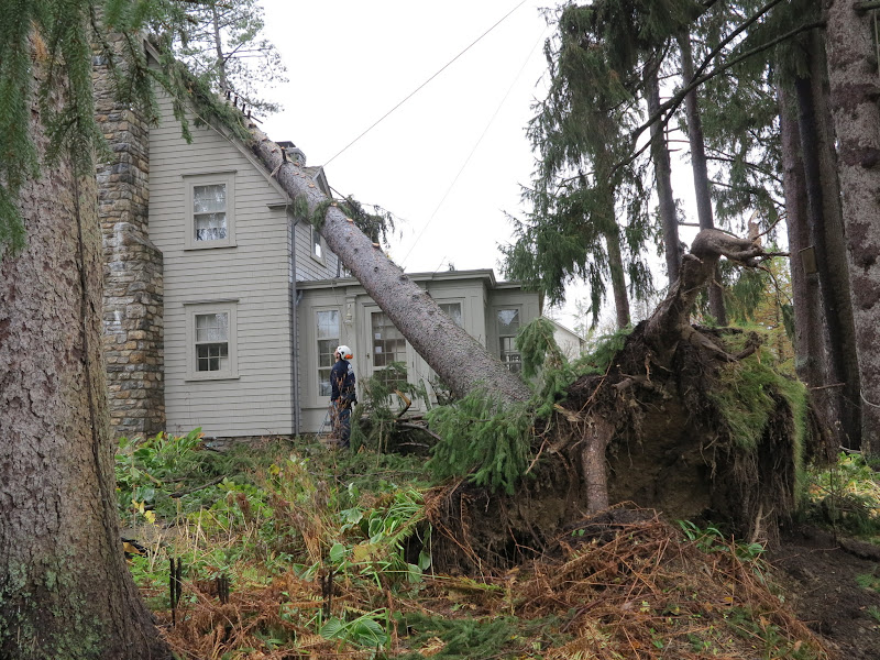 Removing A Tree From The Roof Of A House The Martha