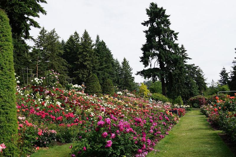 33 - Portland Rose Garden