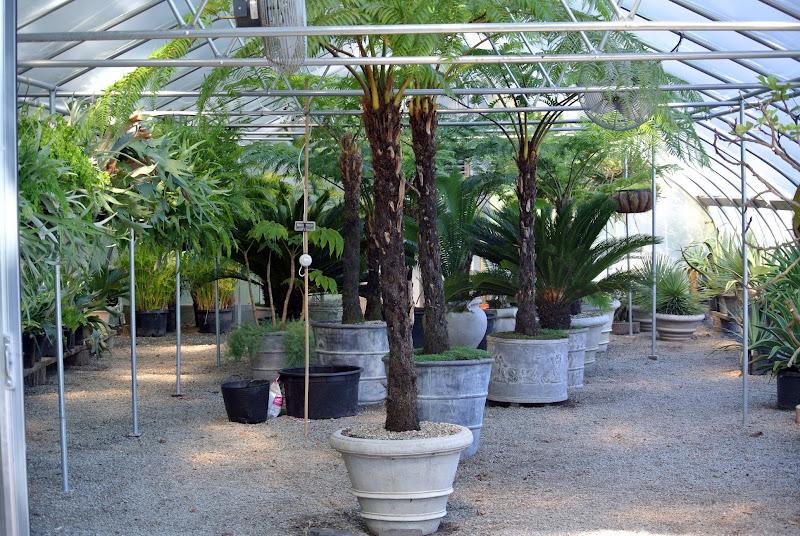 Repotting Plants - The Martha Stewart Blog