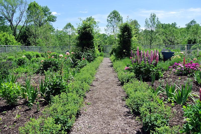 Early June Flowers in My Garden - The Martha Stewart Blog