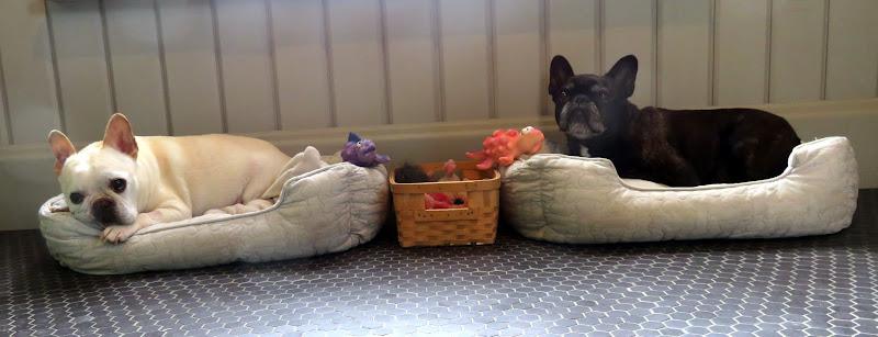 New Beds from PetSmart - The Martha Stewart Blog