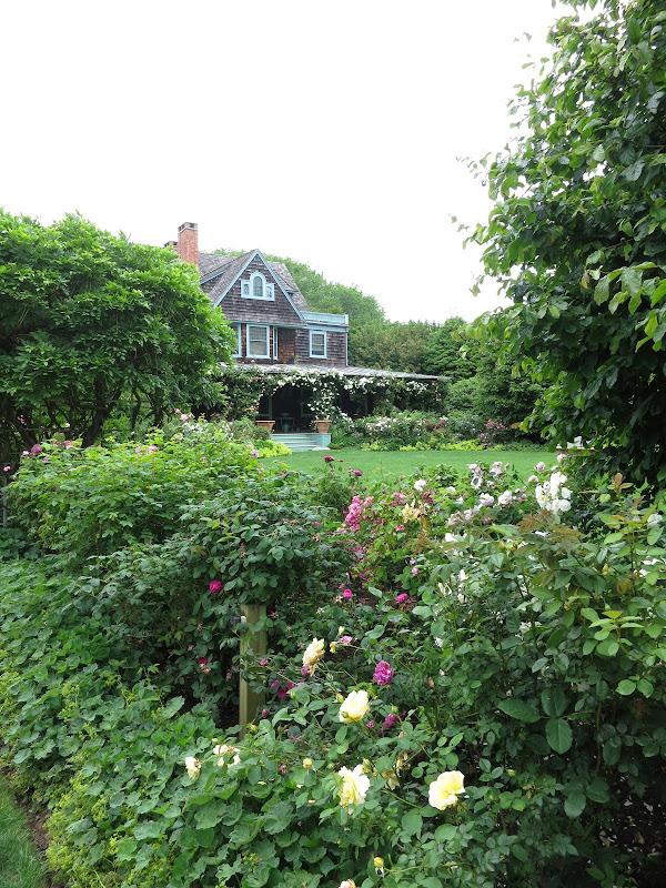 My Gardens in East Hampton and Places I Walk - The Martha Stewart Blog